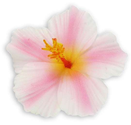 White pink small hibiscus flower hair clips shaka time hawaii white pink small hibiscus flower hair clips mightylinksfo