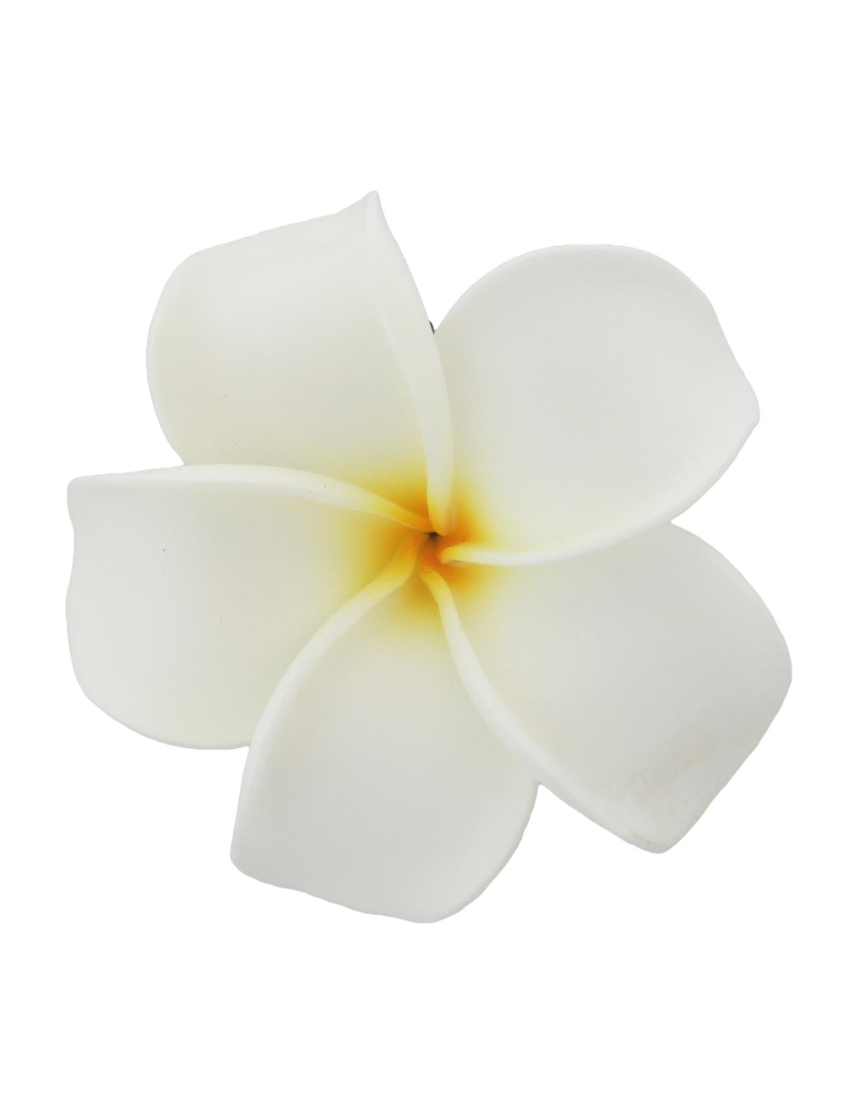 Single Plumeria White Background