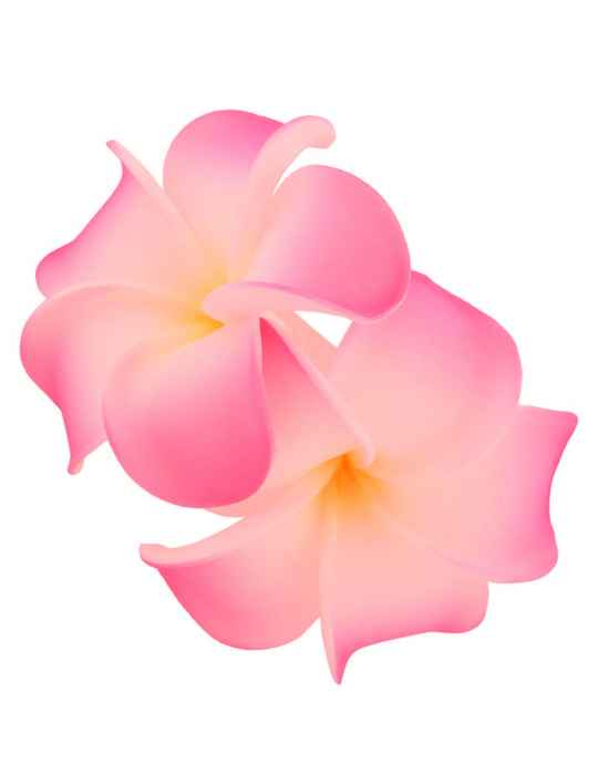 2 hawaiian plumerias flower hair clip white pink shaka time hawaii 2 hawaiian plumerias flower hair clip white pink mightylinksfo