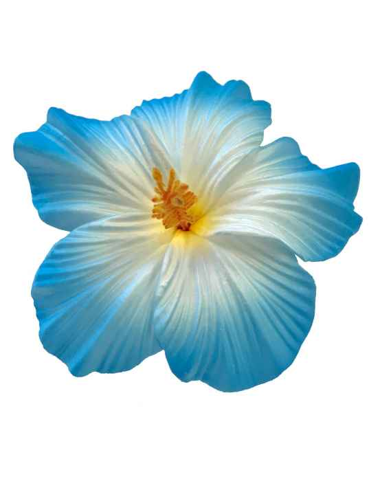 Large Hibiscus Flower Hair Clip White Blue Shaka Time Hawaii